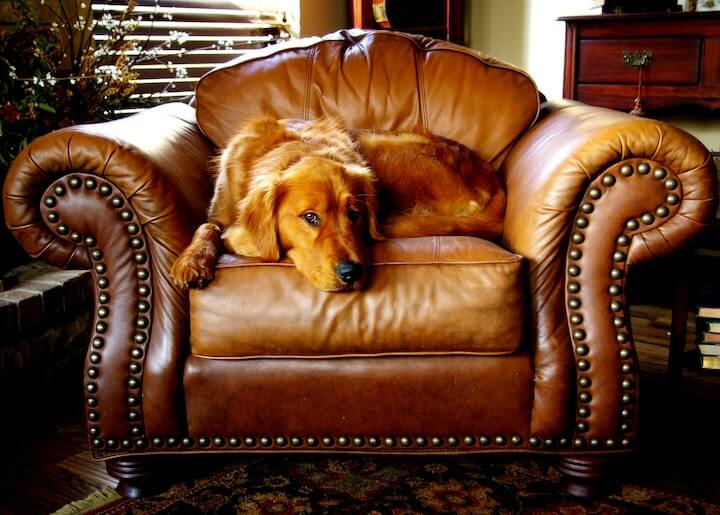 Chem-Dry leather upholstery cleaners