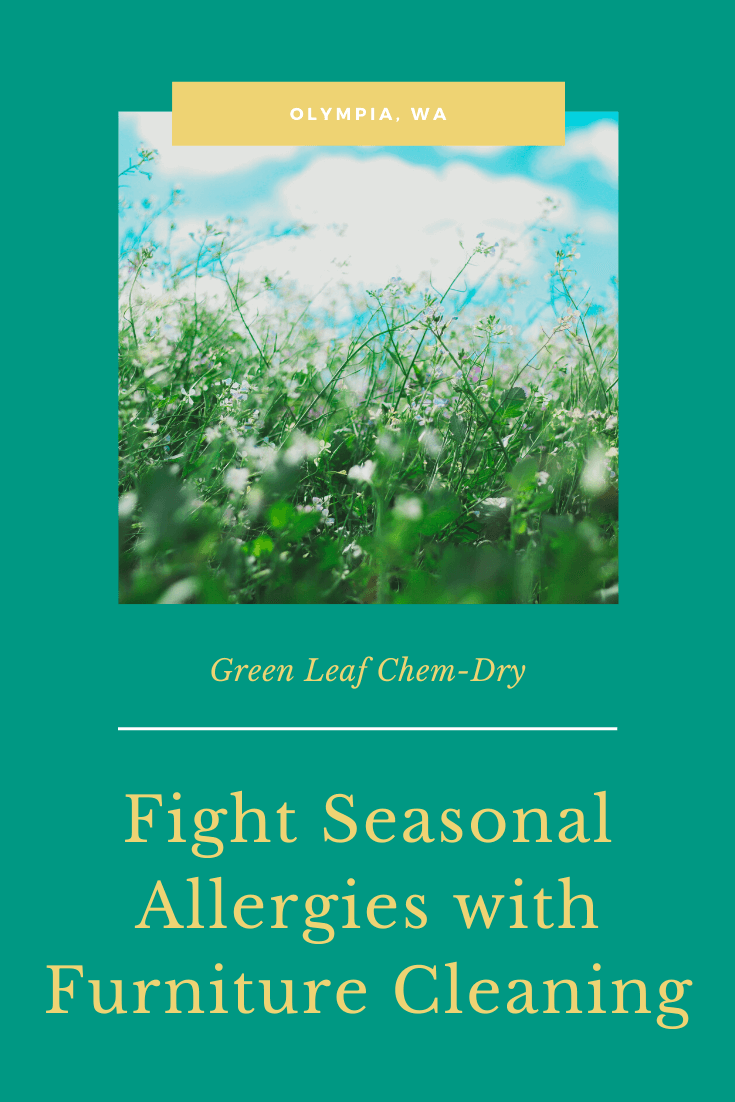 fight seasonal allergies with furniture cleaning in Lacey, wa