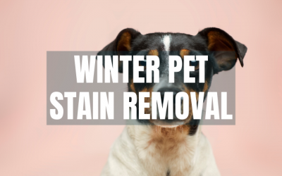 Best Practices For Winter Pet Stain Removal
