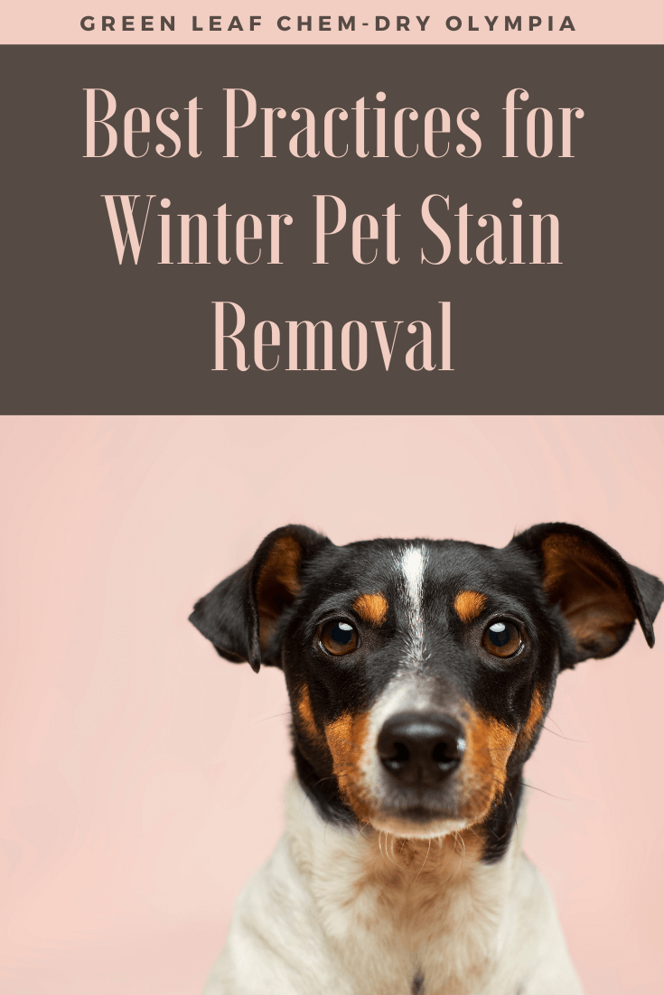 Pet stain removal in Tumwater, wa