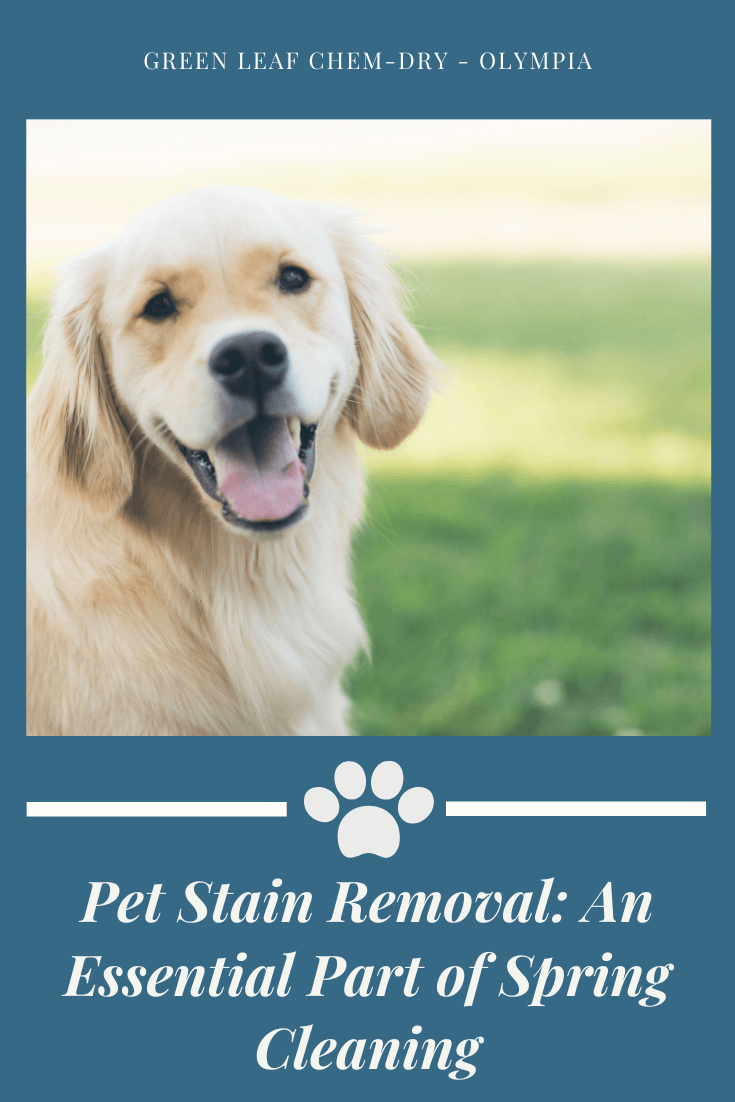 Remove pet urine stains in Lacey WA